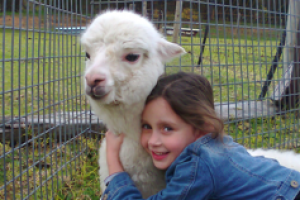 girl with an Alpacca in Goolwa Animal Farm